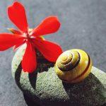 Yoga Nidra, una práctica para la transformación