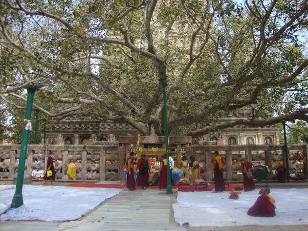 Buda Purnima, celebrar la busqueda del despertar_4
